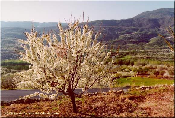 Turismo rural en el Vall del Jerte este otoño
