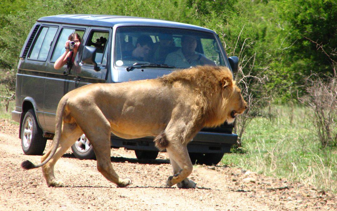 Safaris inolvidables en África del Sur