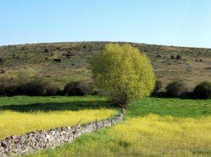 Plan de Competitividad Turística Turismo Activo en las zonas de Sierra de Gredos y Valle de Iruelas