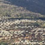 Valle del Jerte, Cáceres, la belleza de los cerezos