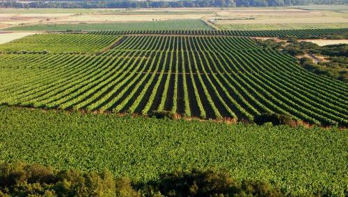Ruta de los viñedos de Navarra