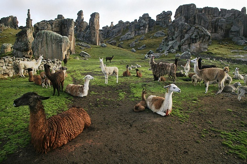 Ecoturismo Rural en Perú – Cerro de Pasco