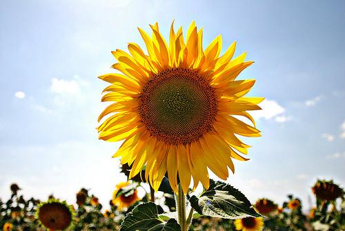 La protección solar en las zonas rurales