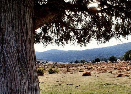 Turismo rural en Salas de los Infantes