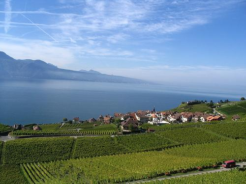 Suiza, región de Lavaux, viñedos junto al gran lago